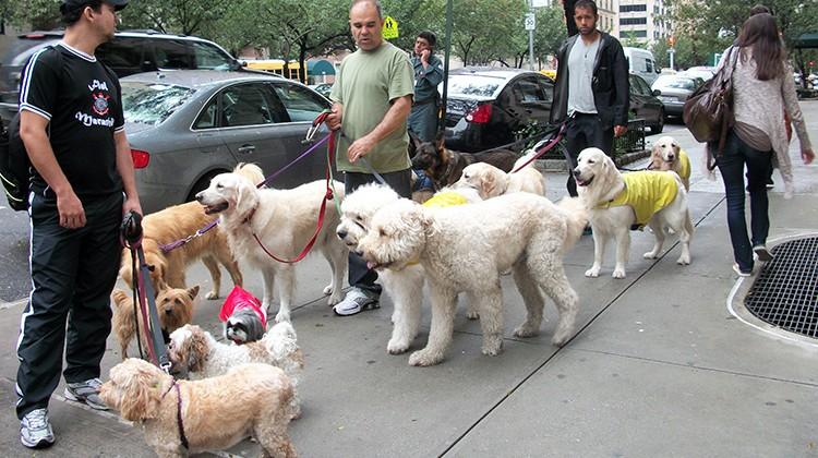 """""""Wyprowadzacze"""" psów w Nowym Jorku Fot. Justyna Giedrojć"""