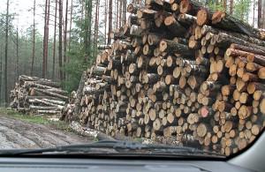 Właściciele prywatnych lasów najczęściej nie certyfikują drewna, bo wiąże się to z dodatkowymi kosztami, które ostatecznie trzeba wkalkulować w cenę sprzedaży Fot. Marian Paluszkiewicz