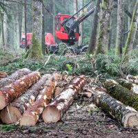 Ministerstwo wstrzymuje wycinanie drzew,  ale gorączkowe prace nadal trwają