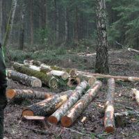 """Będą protesty """"zielonych kamizelek""""w obronie litewskich lasów"""